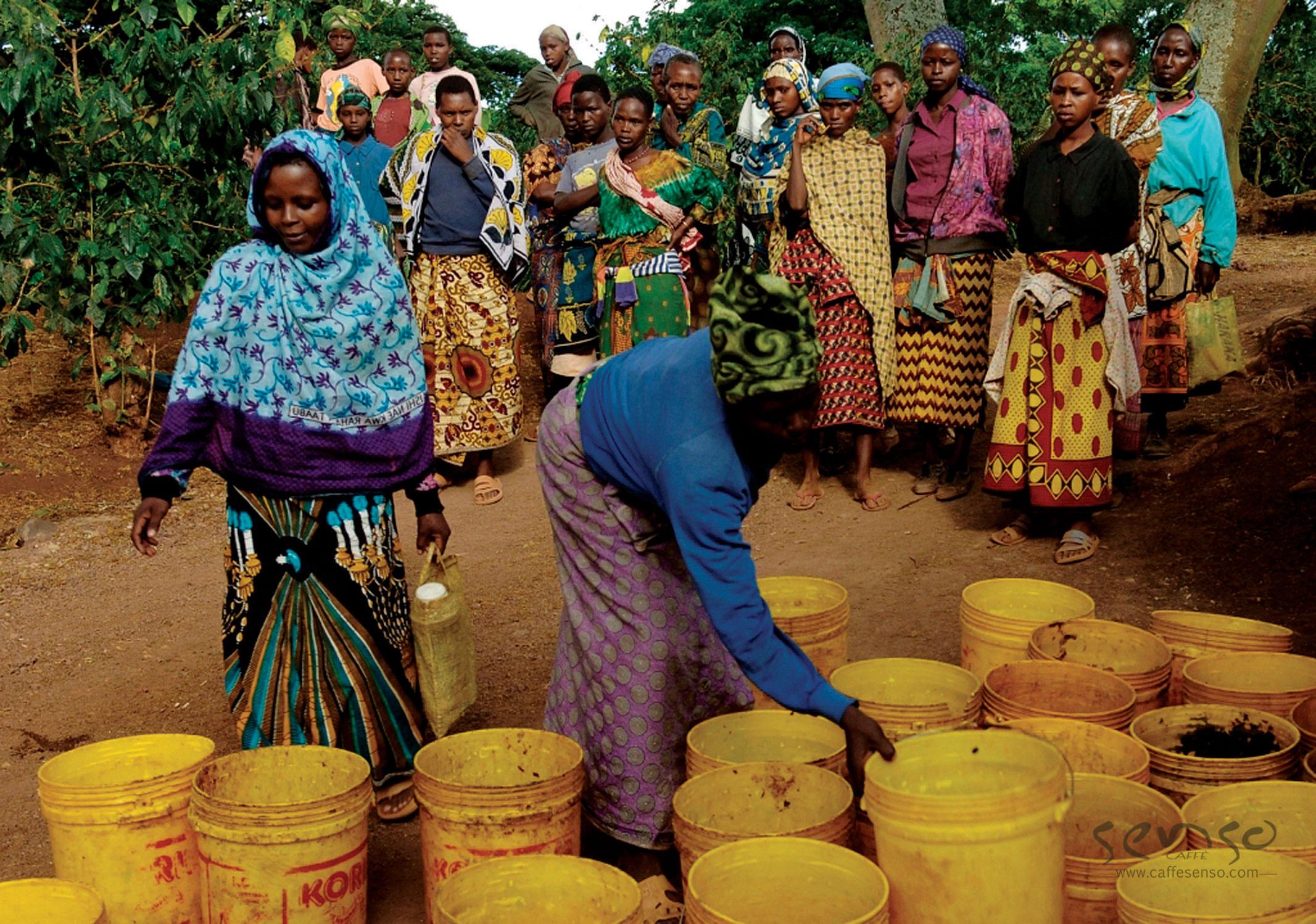 عکس مزارع قهوه تانزانیا