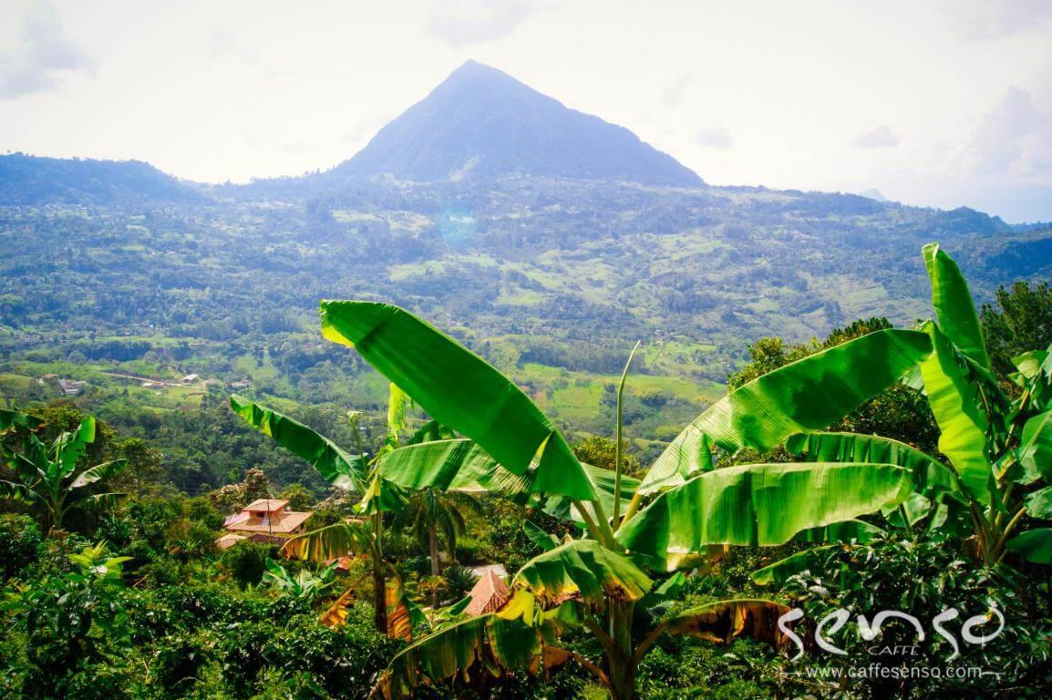مزارع قهوه کلمبیا طبیعت کلمبیا